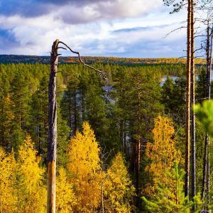 Отдых в Северной Карелии. Золотая осень в Калевале