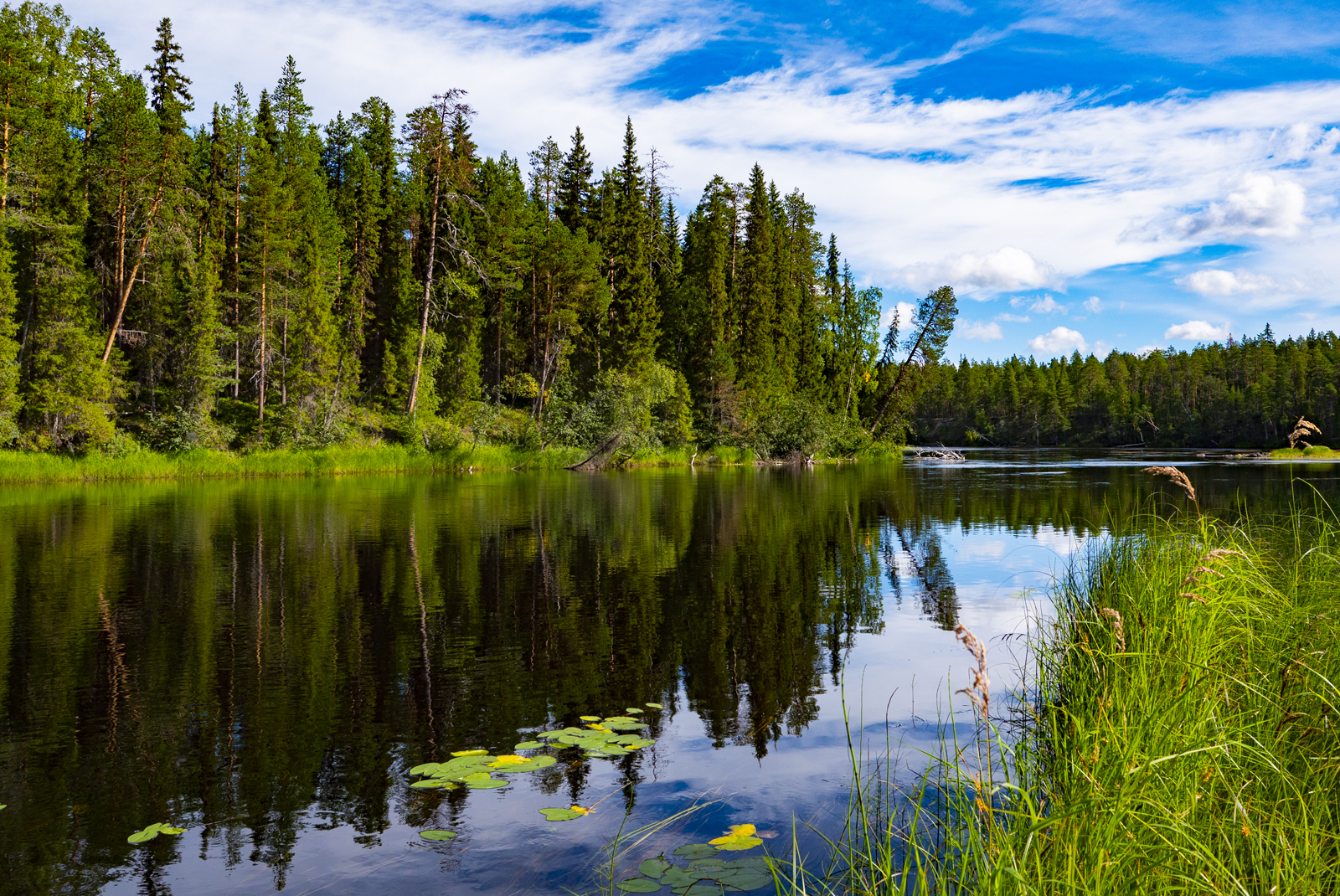 Река Пистайоки таёжное лекарство от хворей цивилизации