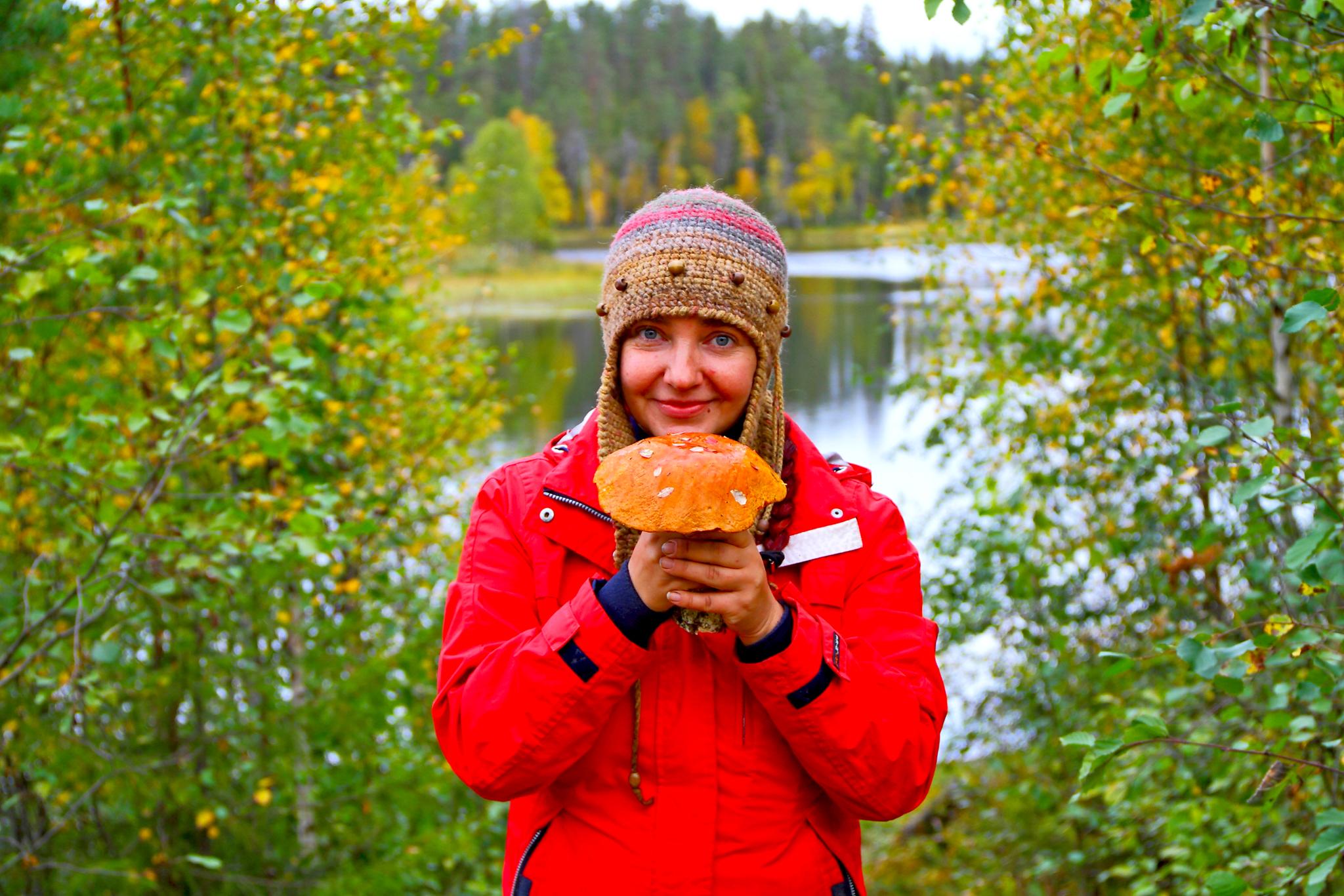 Северная Карелия как правильно собирать грибы
