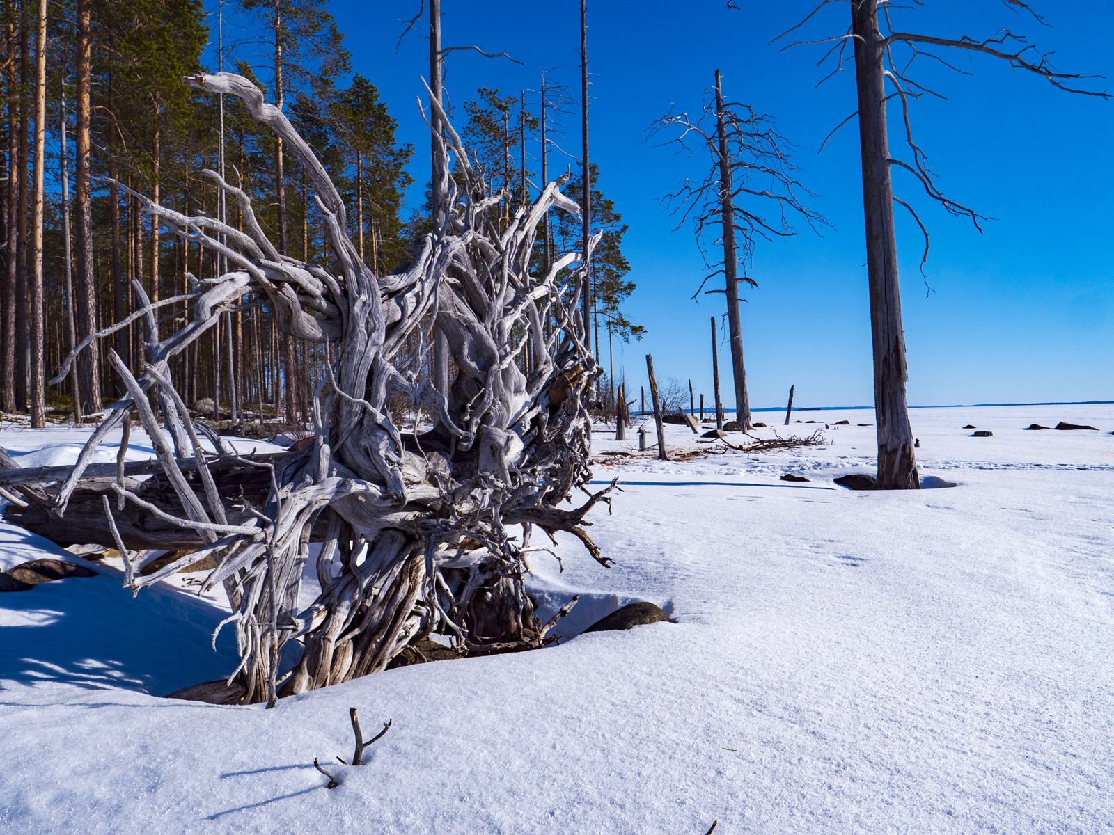 Фото сафари на снегоходах в Карелии Калевала